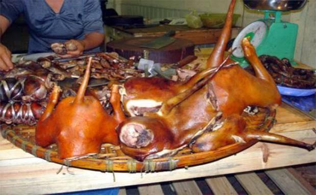 'Thu Minh ơi, hãy kêu gọi đừng ăn thịt chó!'