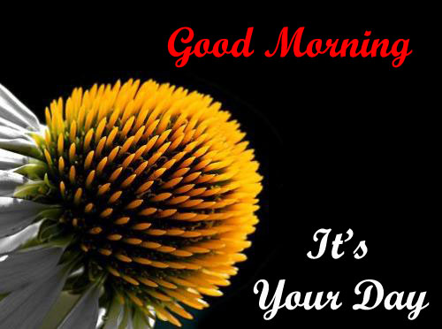 good morning new messages download flowers images hd wallpapers