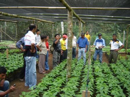 Radio la voz de bagua grande for Viveros en capital