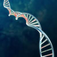 DNA testing for celiac disease
