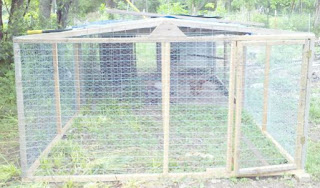 chicken design, chicken coop design, chicken pen, frugal living
