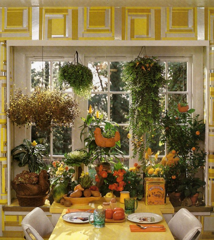 Decorating Dilemma House Plants: It's A Jungle In There: Invasion Of The 1970s Houseplants