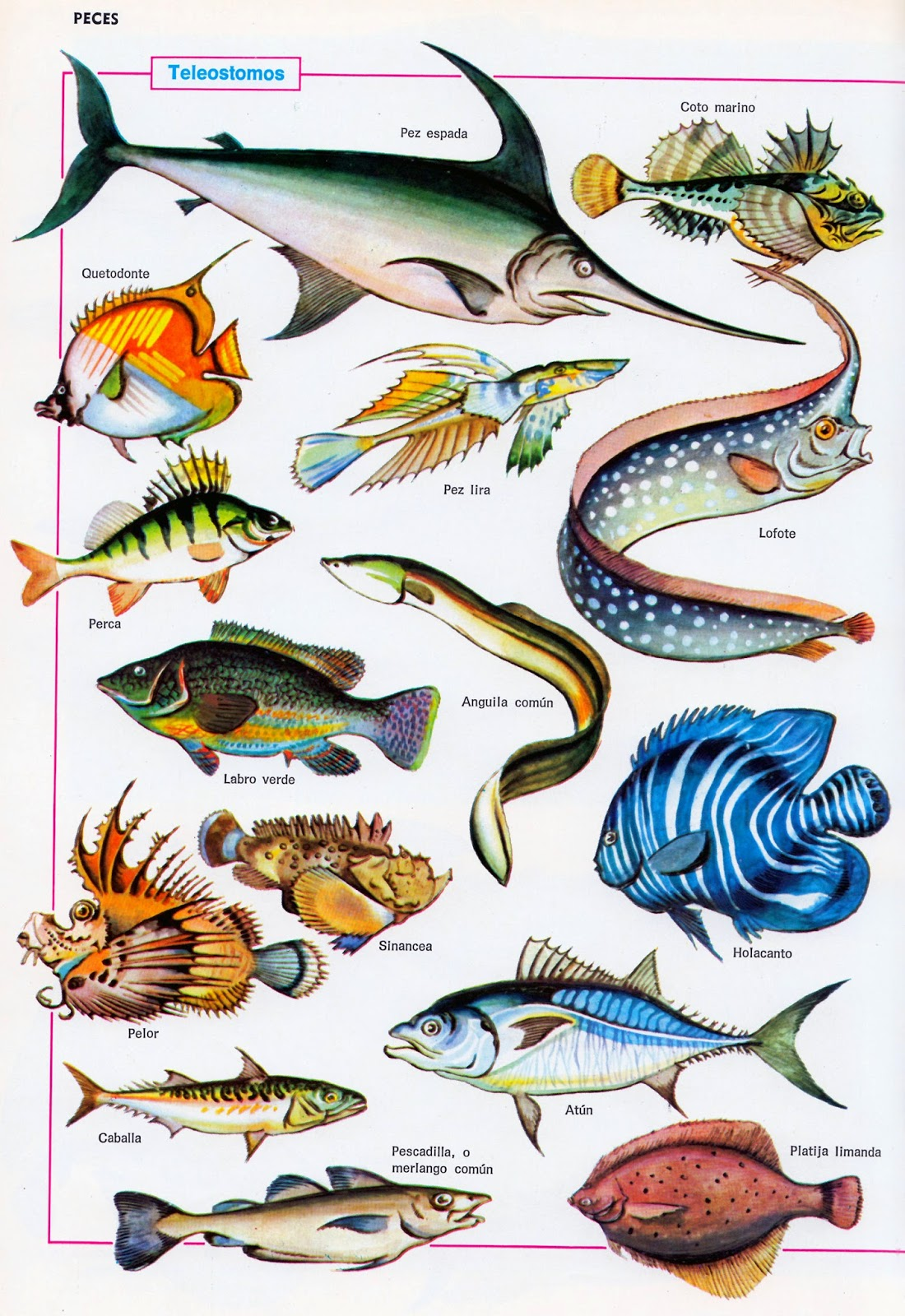 Entusiasco los peces de colores for Tipos de jaulas para peces
