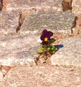 VÄXTLISTOR för bistra lägen, det finns växter för ALLA odlingslägen!