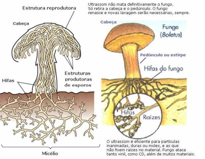 Pedicuro de pregos com um fungo em casa