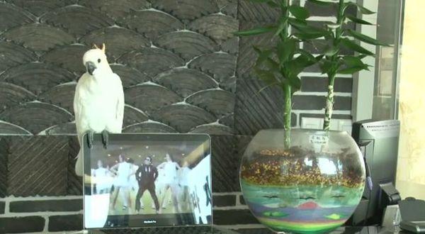 Video Lucu: Burung Kakak Tua Ini Bisa Bernyanyi Lagu Gangnam Style!