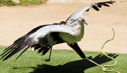 Contoh Cerita Pendek Bahasa Jawa Ular Berbisa dan Burung Elang