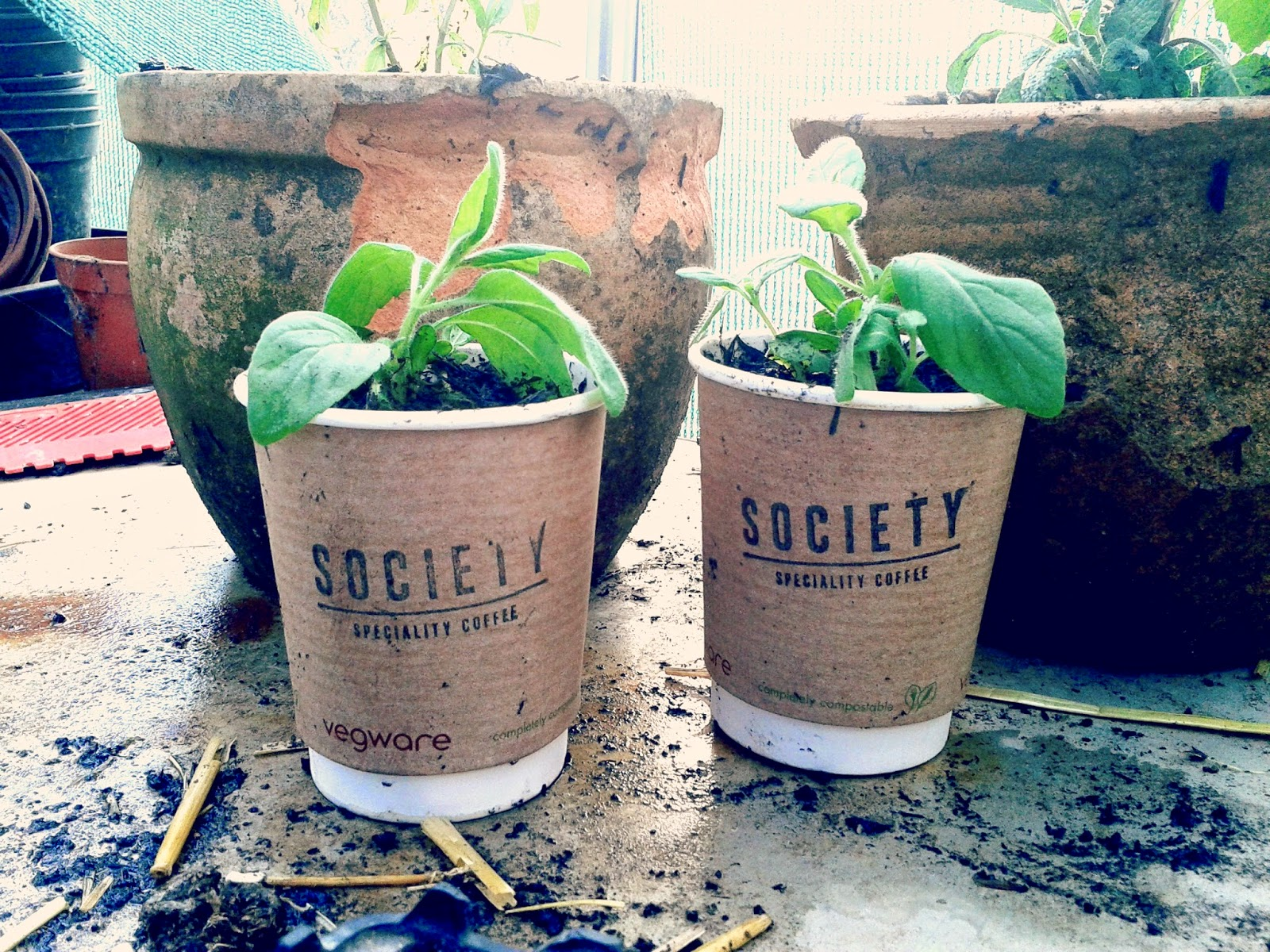 Project 365 day 112 - Coffee cups and herbs // 76sunflowers