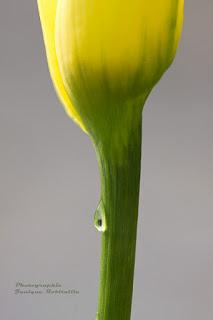 photo fleur macro artistique