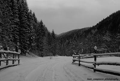 Iarna Winter Inverno Invierno Bran