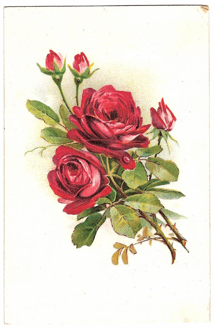 Букет роз фото дома на полу