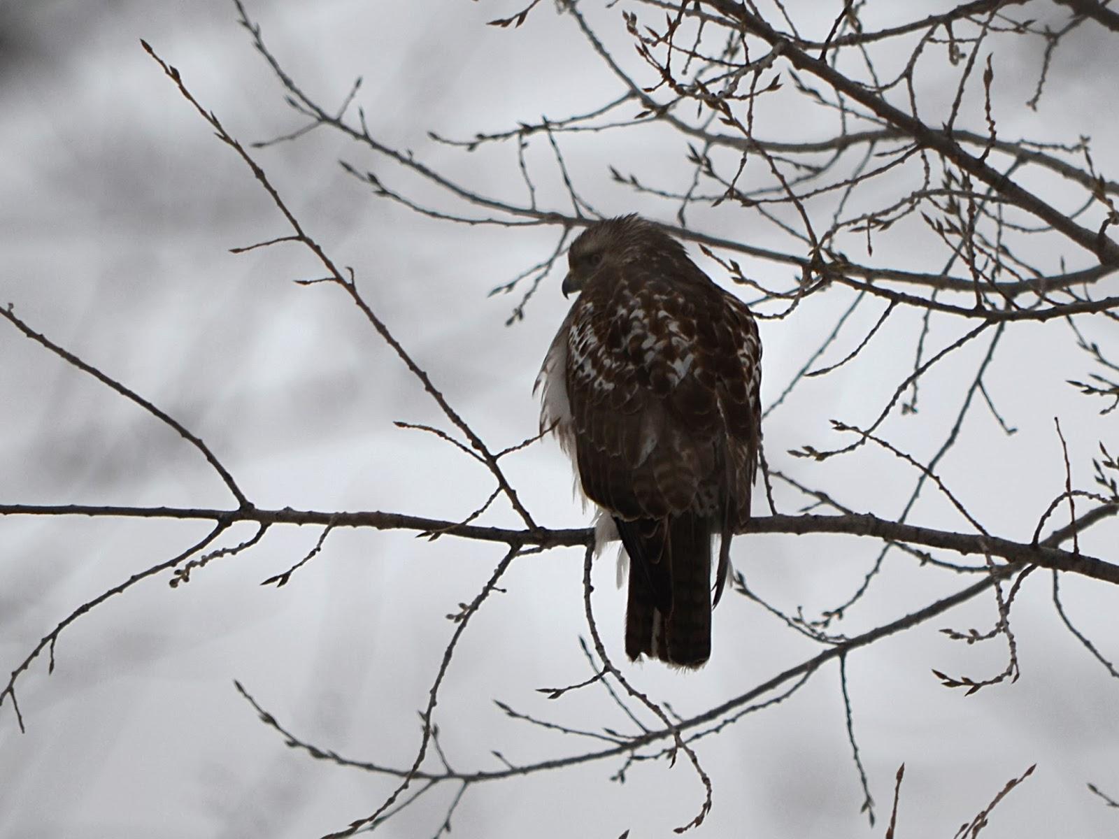 palmer lake park nature blog u2022 great backyard bird count 2014