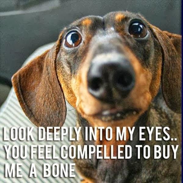 Funny Cute Dachshund Dog