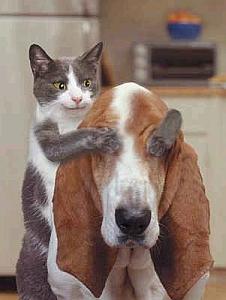 Imagenes Graciosas de Animales, Gatos