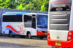 Jip Willys Indonesia