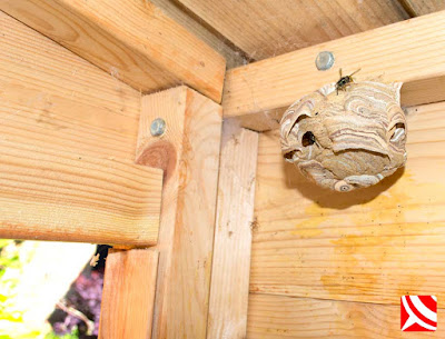 wasps in garden shed