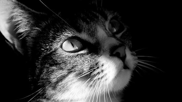 Cute Cat HD Wallpaper
