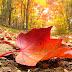 Las hojas de otoño: literatura para la ocasión