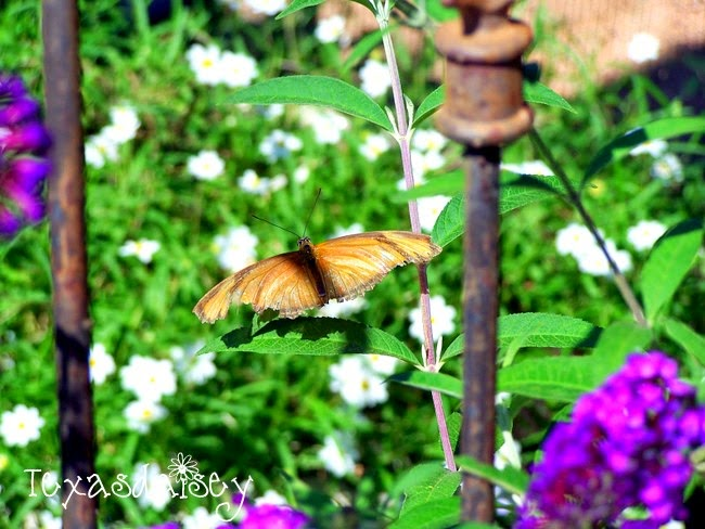 Plants to attract butterflies to your garden 2