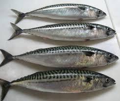 khasiat ikan, menjaga kehalusan dan kelembapan kulit