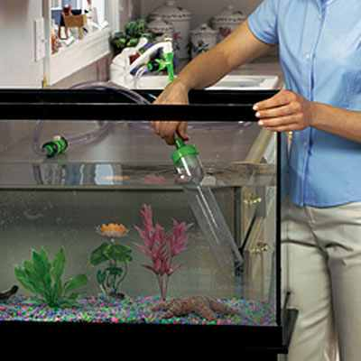 Business ideas small business ideas how to start an for How often do you clean a fish tank