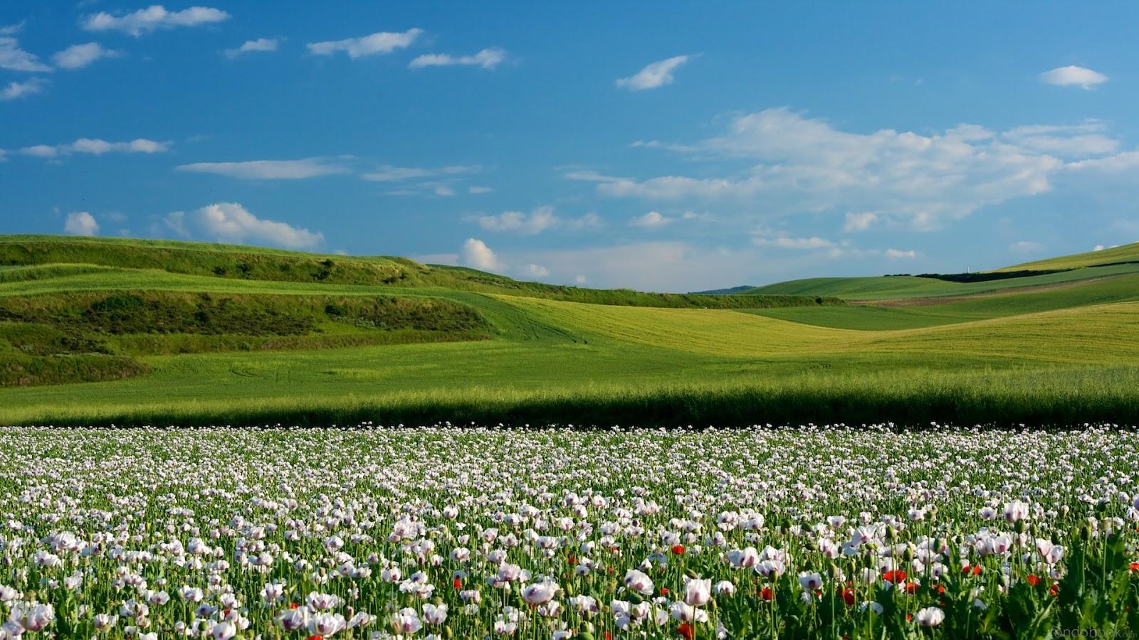 fondos primavera: