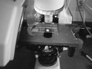 Tiriamas plaukų mėginys ant mikroskopo stalelio