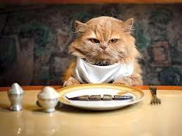 Panduan Cara Mengganti Makanan Kucing Anda