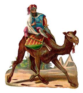 stock camel rider image