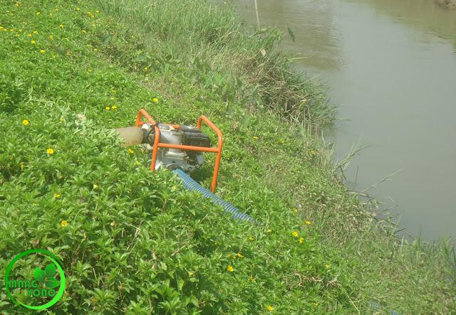 Debit air menurun Petani Padi Pagaden Barat tetap tanam padi