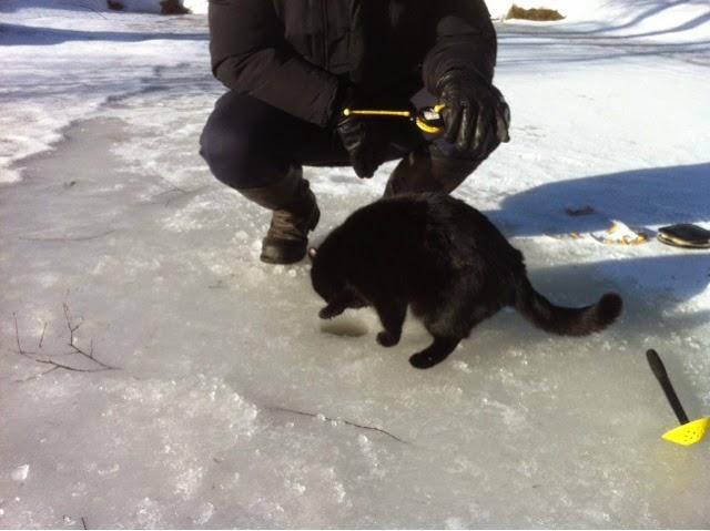 Pilkkikaverina kissa