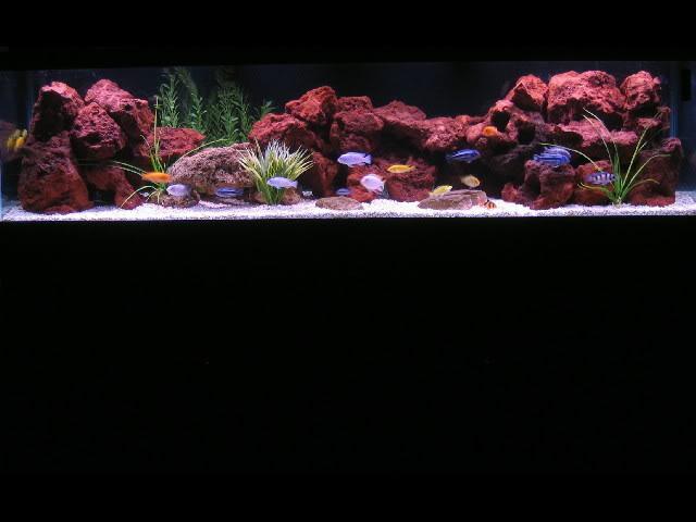 đá nham thạch mô phỏng rặng san hô