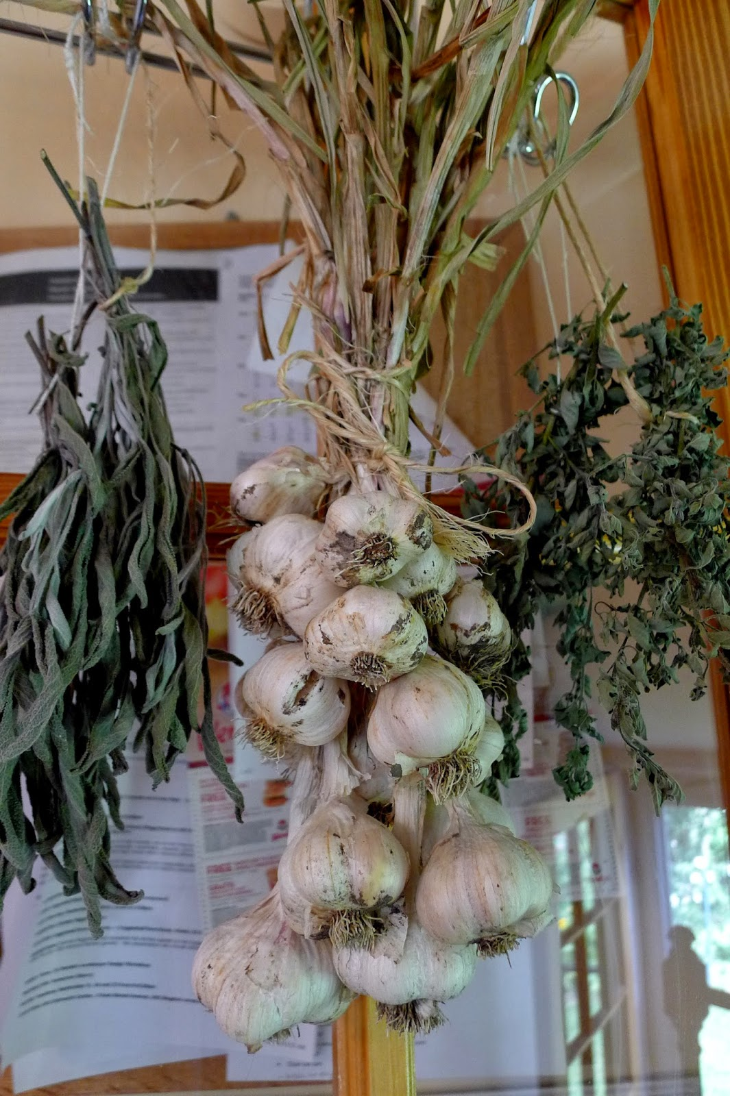 Cured garlic, storing garlic, preserving, urban farming