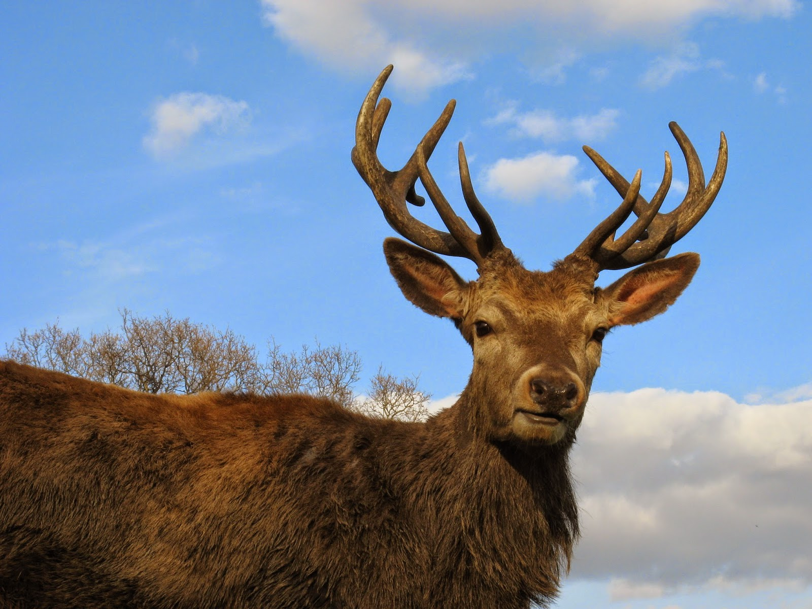 http://zoozon.blogspot.com/2014/12/stag-pictures-gallery-8.html