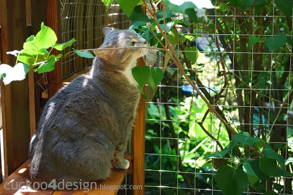 cat enjoying outdoor cat enclosures