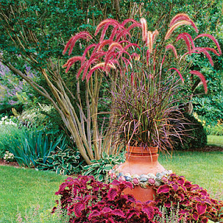 5 must have fall container gardens for Ornamental grass with purple plumes
