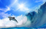 dolphin in wave