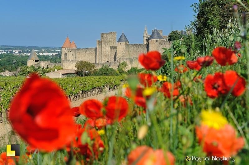 carcassonne et coquelicots à partir des vignes photo pascal blachier