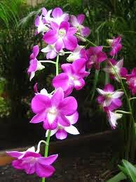 jual macam macam bunga