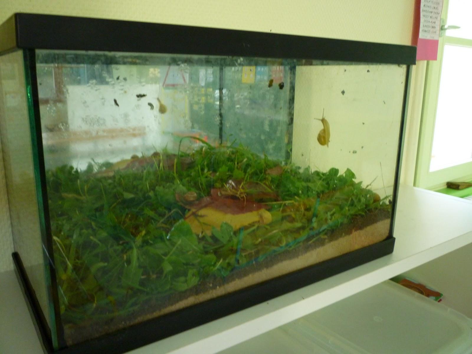 Souvent Ecole Maternelle Vitteaux: Elevage d'escargots chez les petits AO13