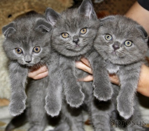 Домик для кошек в Одессе. Сравнить цены, купить