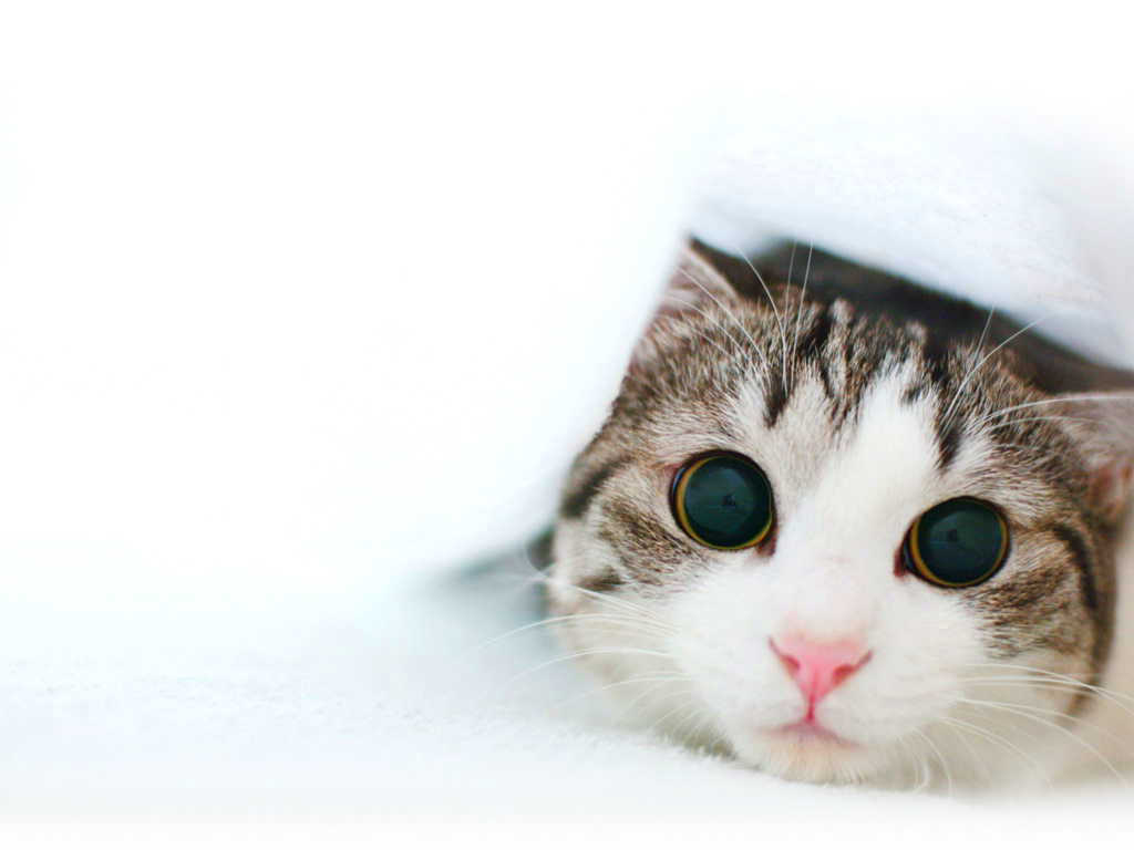 Latest Funny Pictures: Cute Funny Kittens Photoes