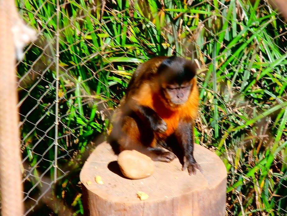 zoo exhibits san diego