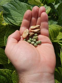 Réussir ses semis - produire ses graines  Hgyh+002