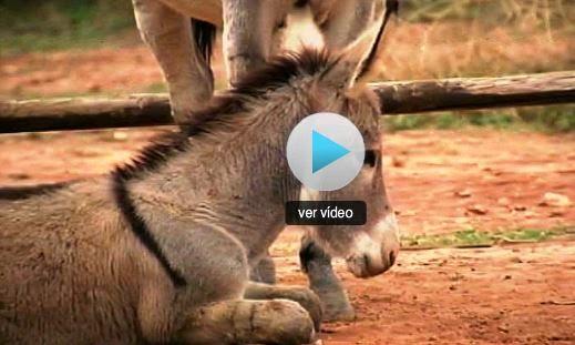 http://www.rtve.es/alacarta/videos/telediario/platero-yo-juan-ramon-jimenez-cumple-100-anos/2307785/