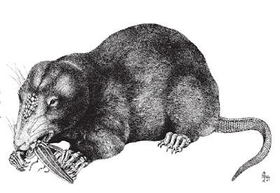fossil mammals Haldanodon