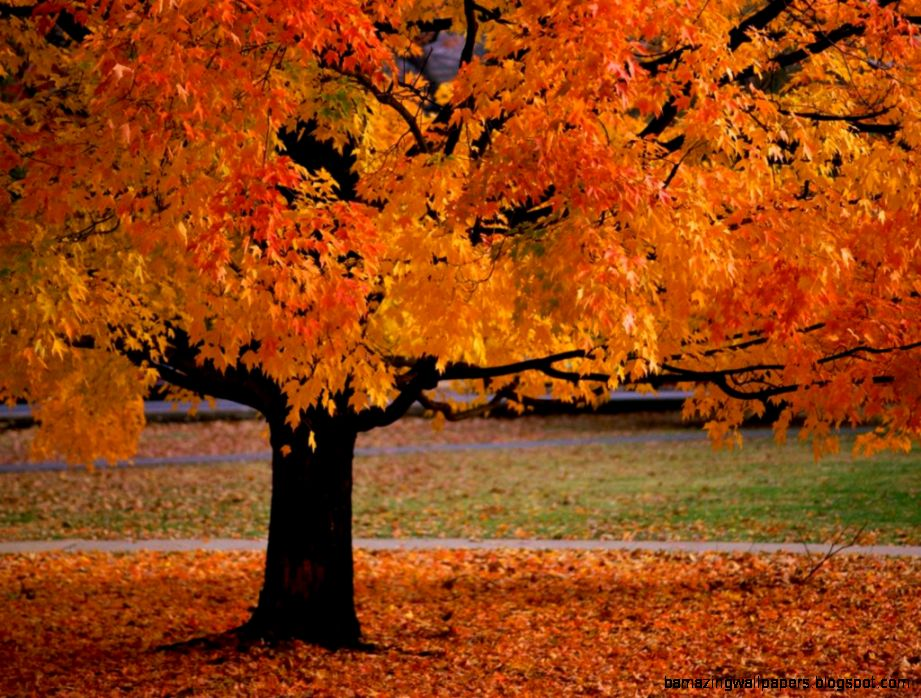 Autumn Trees Leaves wallpaper  1024x768  29035