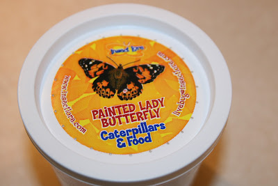 Butterfly Garden Kit Insect Lore butterfly unit study homeschool preschool