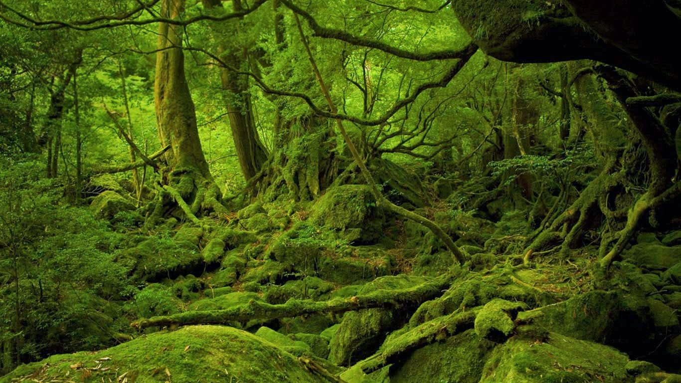 Yakushima Japan  city photos gallery : Mononoke Hime no Mori on Yakushima, Japan © Hiroyuki Nagaoka/Getty ...