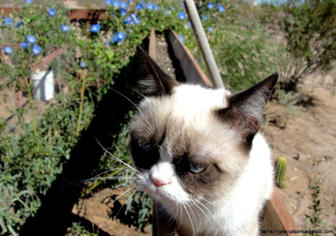 t grumpy cat tardar sauce grumpycat  tard the grumpy